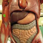 Upper Endoscopy GI Doctor Beverly Hills